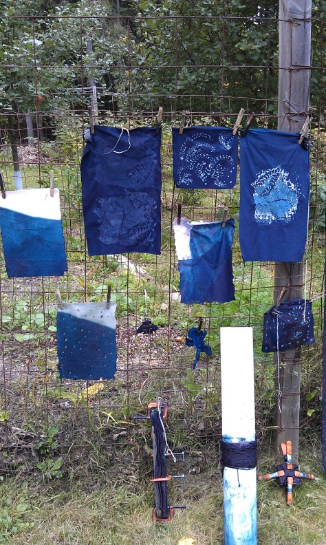 My samples drying at the fence.