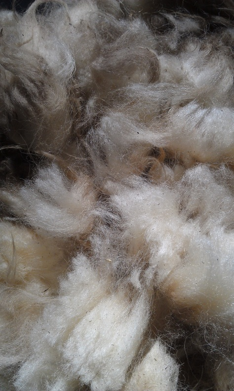 """Violet,"" Icelandic fleece from Wooly Woods Farm."